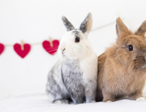 Is a rabbit right for you and your family?