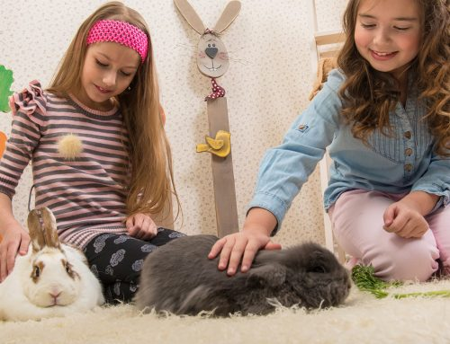 Rabbits as pets for children