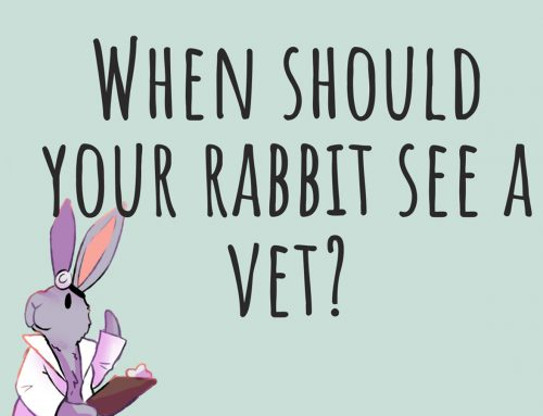 When should your rabbit see a vet